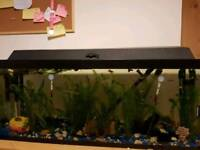 80Litre fish tank (OPEN TO OFFERS) 3ft (length) by 1ft (width)