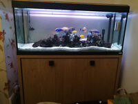 AQUARIUM FULL SET UP 4FT WITH CYCHILDS