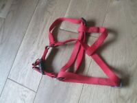 Dogmatic style dog head harness for training / restraining while on walk