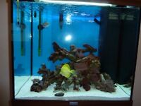 Marine Fish Tank and Equipment