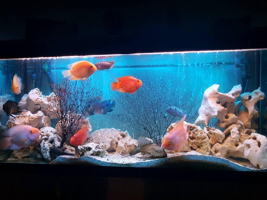 Fluval 240 fish tank complete setup including fish
