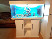 WHITE JUWEL RIO 180 LITER FISH TANK AND STAND FOR SALE,FULL SET UP,