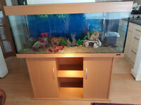 4FT JUWELRIO 240 LITER FISH TANK AND STAND FOR SALE,,FULL SET UP