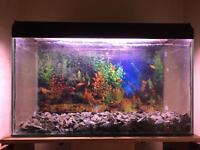 Aquarium (x2) + Cabinet For Sale
