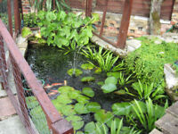 Pond plants oxygenating and marginals