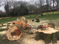 Tree service Halifax area