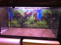130 Litre fish aquarium/tank