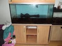 Fish tank,stand,external filter JBL,huge bogwood and more