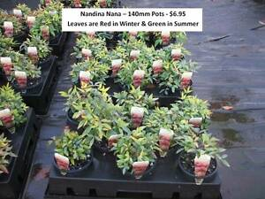 Need Plants for Ground Cover, Borders, Mass Planting? LOOK HERE!! Mudgeeraba Gold Coast South Preview