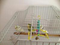 3 Budgies and Cage