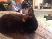 Rabbits baby