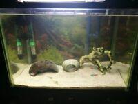 For sale full set fish tank