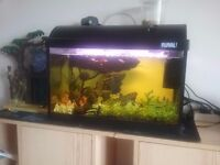 FISH TANK Fluval WITH FISH AND ACCESSORIES AS SHOWN IN FISH TANK