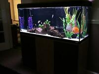 4 ft tropical tank