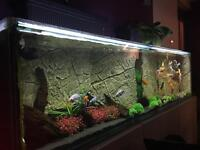 Home available for your unwanted cold water aquarium fish!