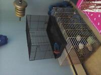 Hamster & Guinea Pig Cages