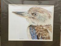 Kookaburra in polychrome pencil