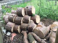 LARGE LOGS TO SPLIT FROM 60 FOOT TREE - SENSIBLE OFFERS CONSIDERED