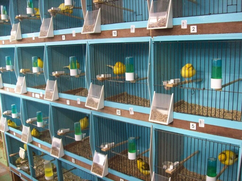 how to build canary breeding cages