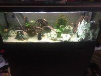 Full tropical Aquatic set up 4ft tank unit filter and contents