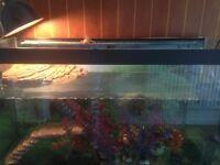Fish tank, filter, plastic plants, ornaments, basking table