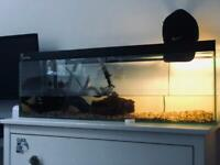 120cm Fish/Turtle tank - 2 Musk Turtles - Heater/External Filter