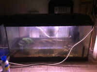 Two fish tanks, all equipment, and Pleco tropical fish
