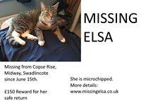Elsa Tabby/white 16 month old cat missing