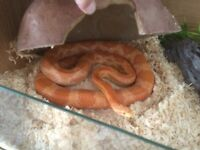 4/12-5ft snake
