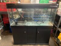 Fish tank, 4ft long, 1.6ft high, 1ft wide and 4.3ft high on cabinet
