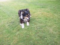 Pet sitting,, bunny boarding, dog walking,- Melton Mowbray, Vale of Belvoir, South Notts