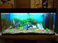 For sale Juwel 180 litre fish tank / aquarium