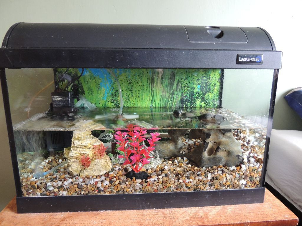 tropical fish tank with red claw crab and extras in