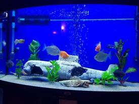 Fluval Tank With Fish & Set Up
