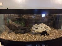 Jewel 450 5ft Bow-front Fish Tank - black with matching Jewel Stand