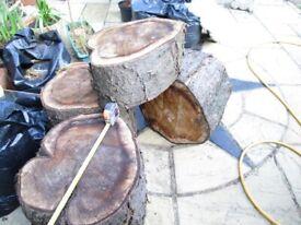 karge tree trunk piecies