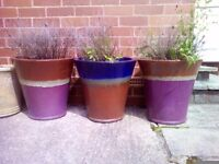 A selection of large garden pots