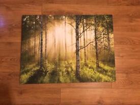 Striking large woodland scene canvas