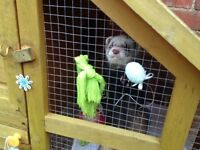 George the ferret/pole