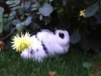 Two storey rabbit hutch