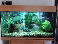 Juwel 125 litre fishtank