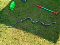 Corn snake cb14 ( male )