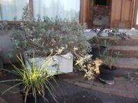 4 garden plants