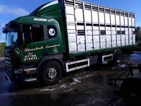 Cattle lorry
