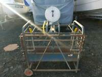 Lamb weigh scales with reasonably new scale fitted farm livestock tractor