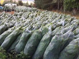 Real Christmas trees up to 14ft. Delivered