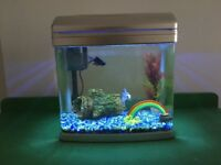 *FREE*Cold water fish tank with filter and fish