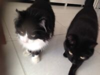 Tom & Henry are looking for a new home!