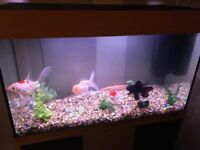 Large JEWEL Fish Tank