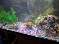 Fish tank 120 Ltr with Stand